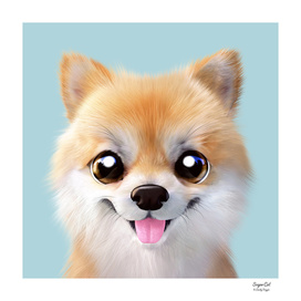Tan the Pomeranian