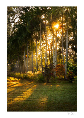 Sunburst at Litchfield National Park