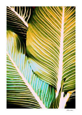 Tropical leaf detail
