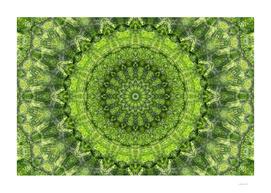 Evergreen II