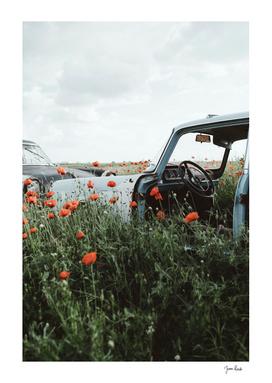 Old car in poppy field