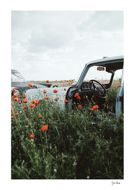 Old car in poppy field