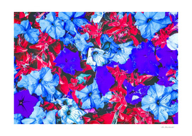 closeup flower texture abstract in blue purple red