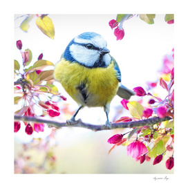 Romantic Flower Blossom with Blue Tit Spring Bird