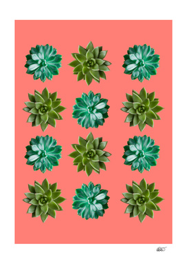 Coral Succulents