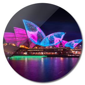 A Sea Creature finds home on the Opera House  shell roofs