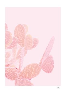 Opuntia Blush
