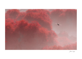 Airplane Flying Above Foggy Red Tree Forest