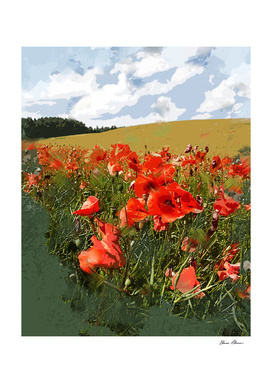 Close Up View of Green Field of Red Poppies and Blue Sky