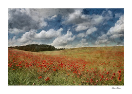 Field of Red Poppies with Dramatic Blue Sky