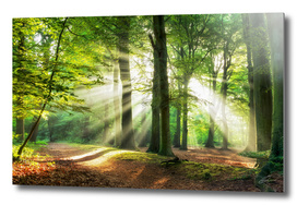 Lighten the Path