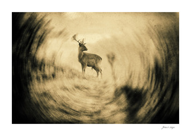 Fallow deer stag standing on slope