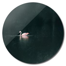 One flamingo floating in lake near bushes