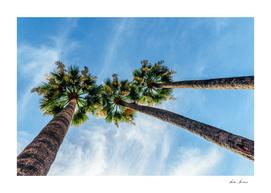Green Palm Trees On Blue Sky
