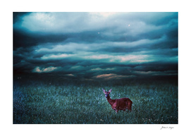 Roe deer in field under dark stormy sky