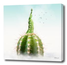 Cactus NY