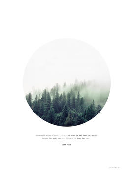 FOREST quote by John Muir