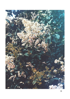 Amongst the Myrtle Tree
