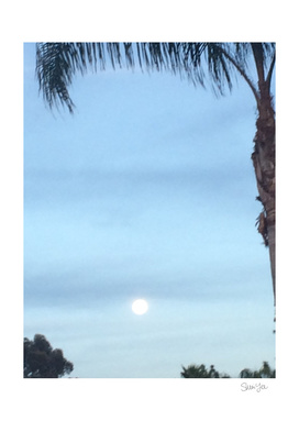 Moon with Palm