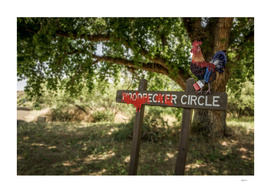Rooster Circle