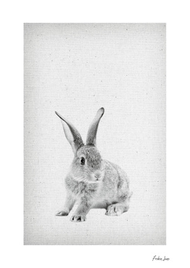 Rabbit 25