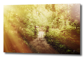 Wooden Bridge-From the Nature As Abstract Series