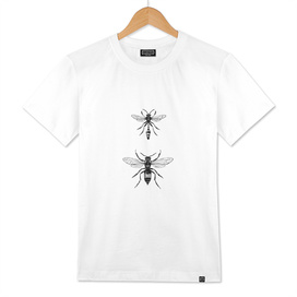 Insectes 04