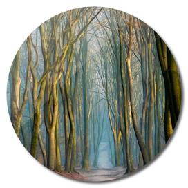 Light & Trees