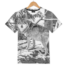 Eurasian Grey Wolf (Black & White Edition)