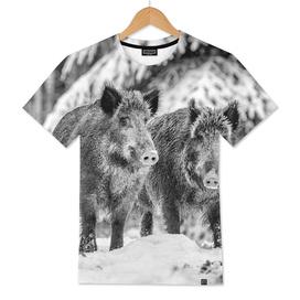 Eurasian Wild Boar (Black & White Edition)