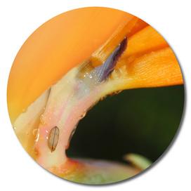 Orange Flower with Tiny Leaf Photo