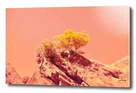 Tree on Mars? by #Bizzartino