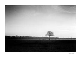 Solitary winter tree in wide open rural landscape
