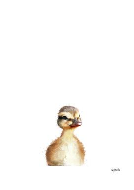 Little Duck