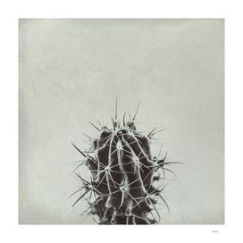 retro cactus