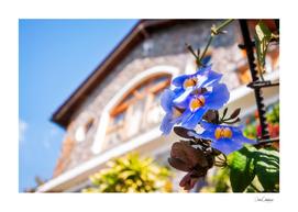 Charming corner of a garden at a lake Atitlan resort