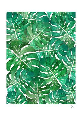 Monstera leaves watercolor n.1