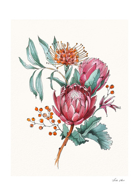 King protea flowers watercolor illustration
