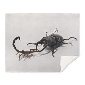 Scorpion Vs. Stag-Beetle