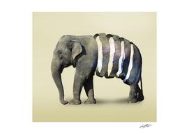 Inner Space Elephant
