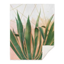 Cactus with geometric