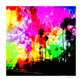 palm tree at the California beach