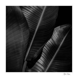 Banana leaf allure - night