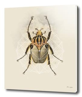 Beetle Geo