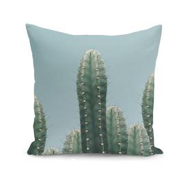 cactus the nature series