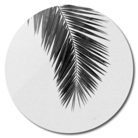 Palm Leaf I BW