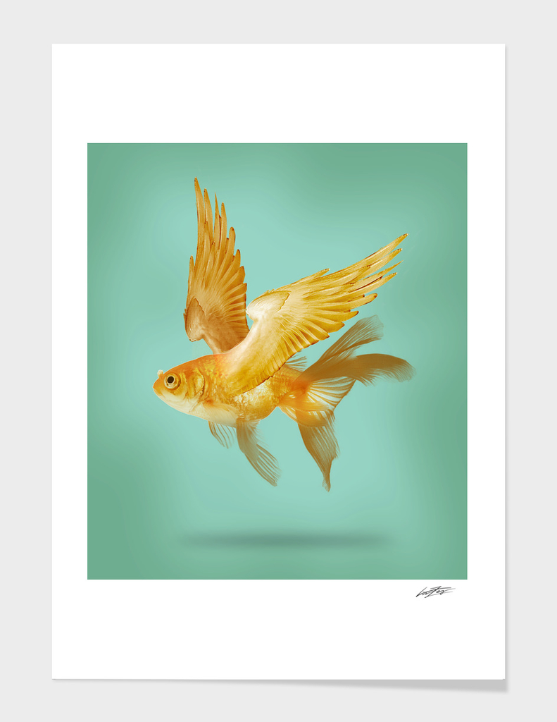 FLYING FISH main illustration