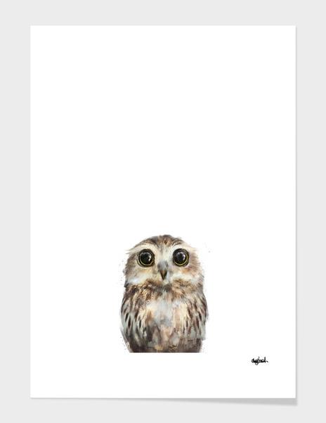 Little Owl main illustration
