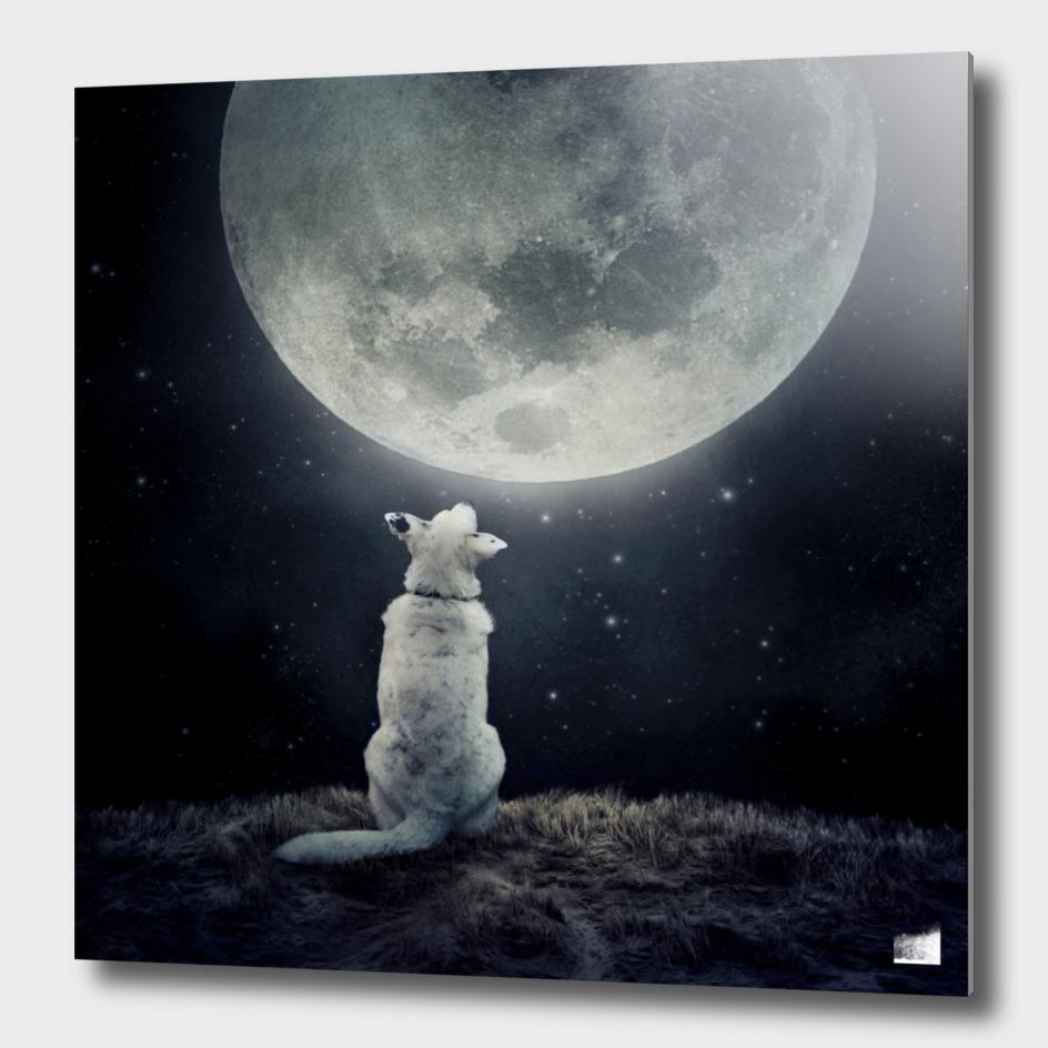 Full Moon main illustration