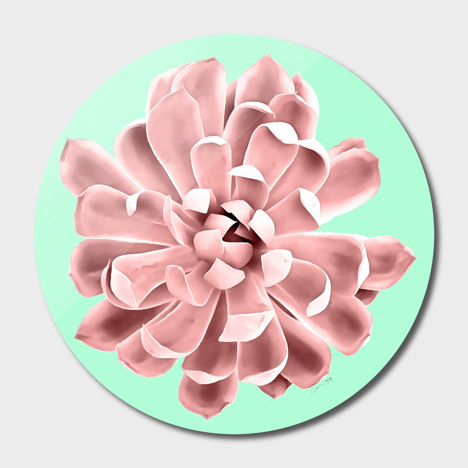 Pink Succulent Plant on Cyan Wall